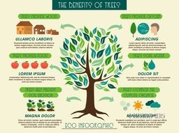 Creative ecology infographic layout with illustration of a green tree and showing benefits of trees.