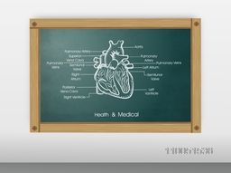 Structure of human heart with its parts name on a chalk board.