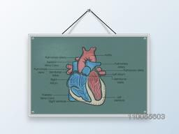 Structure of a human heart with its parts description on hanging board.